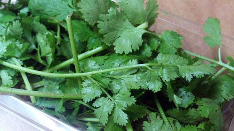 koriander, cilantro, kínai petrezsejem, candida