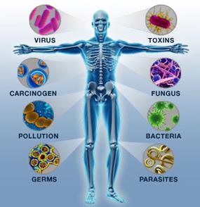 nehézfémek, immunrendszer, candida